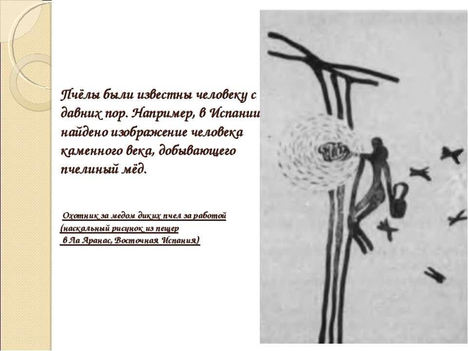 Пчёлы были известны человеку с давних пор. Например, в Испании найдено изобра...