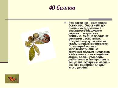 40 баллов Это растение – настоящее богатство. Оно живёт до тысячи лет, достиг...