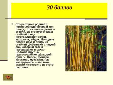 30 баллов Эго растение роднит с пшеницей одинаковый тип плода, строение соцве...