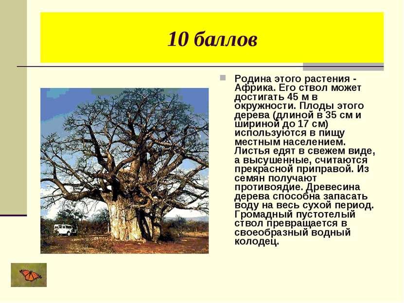 10 баллов Родина этого растения - Африка. Его ствол может достигать 45 м в ок...
