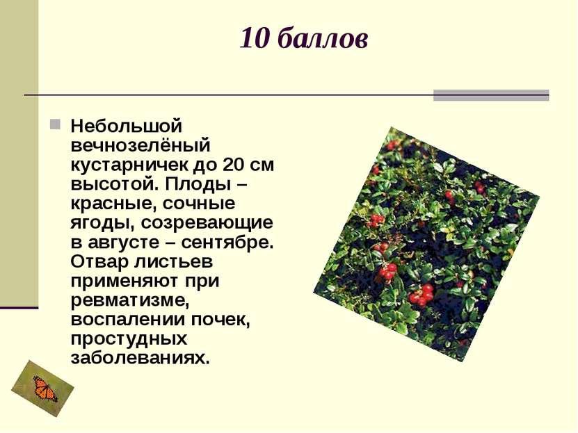 10 баллов Небольшой вечнозелёный кустарничек до 20 см высотой. Плоды – красны...