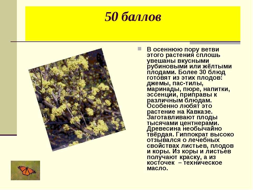 50 баллов В осеннюю пору ветви этого растения сплошь увешаны вкусными рубинов...