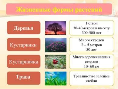 Жизненные формы растений Деревья Кустарники Кустарнички Трава 1 ствол 30-40ме...