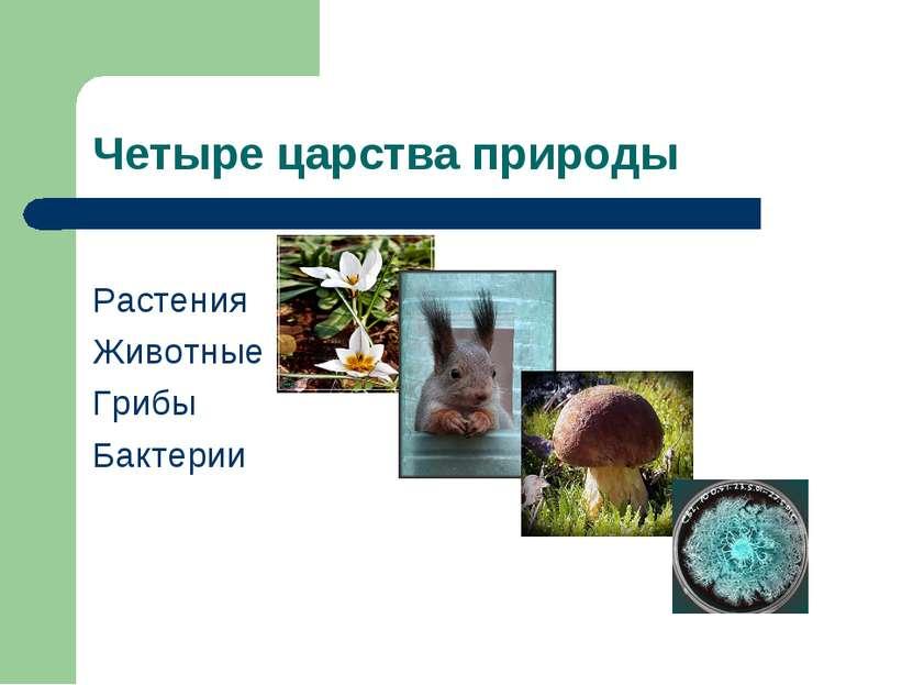 Четыре царства природы Растения Животные Грибы Бактерии