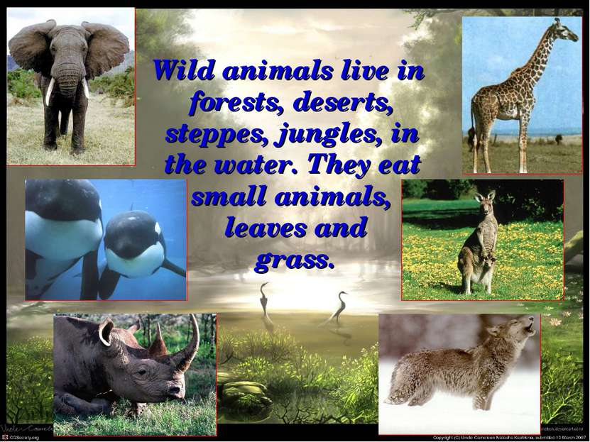 Wild animals live in forests, deserts, steppes, jungles, in the water. They e...
