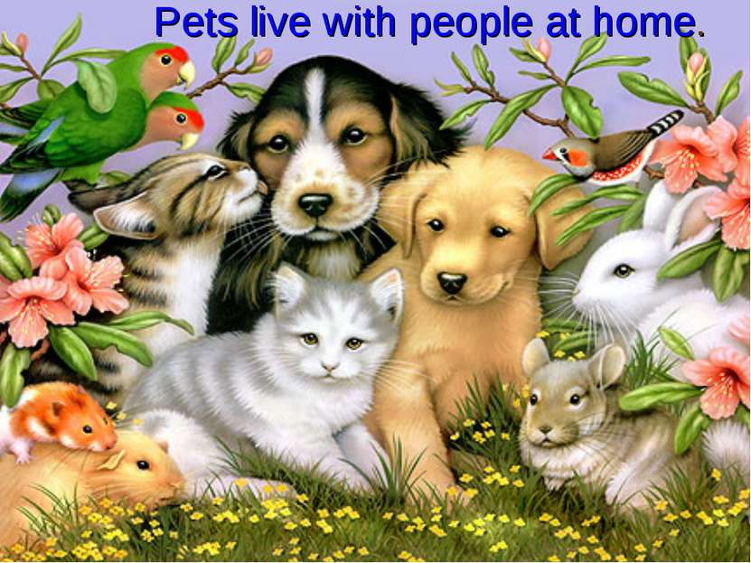 Pets live with people at home.