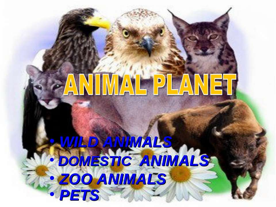 WILD ANIMALS DOMESTIC ANIMALS ZOO ANIMALS PETS