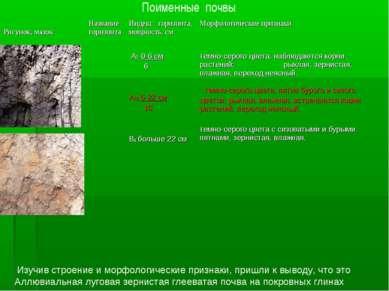 Поименные почвы Изучив строение и морфологические признаки, пришли к выводу, ...