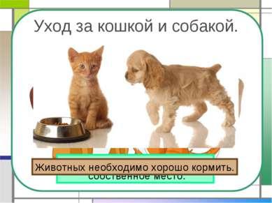 Уход за кошкой и собакой. У кошки и собаки должно быть собственное место. Жив...