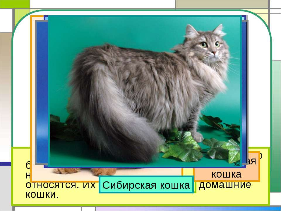 Презентация Про Кошек