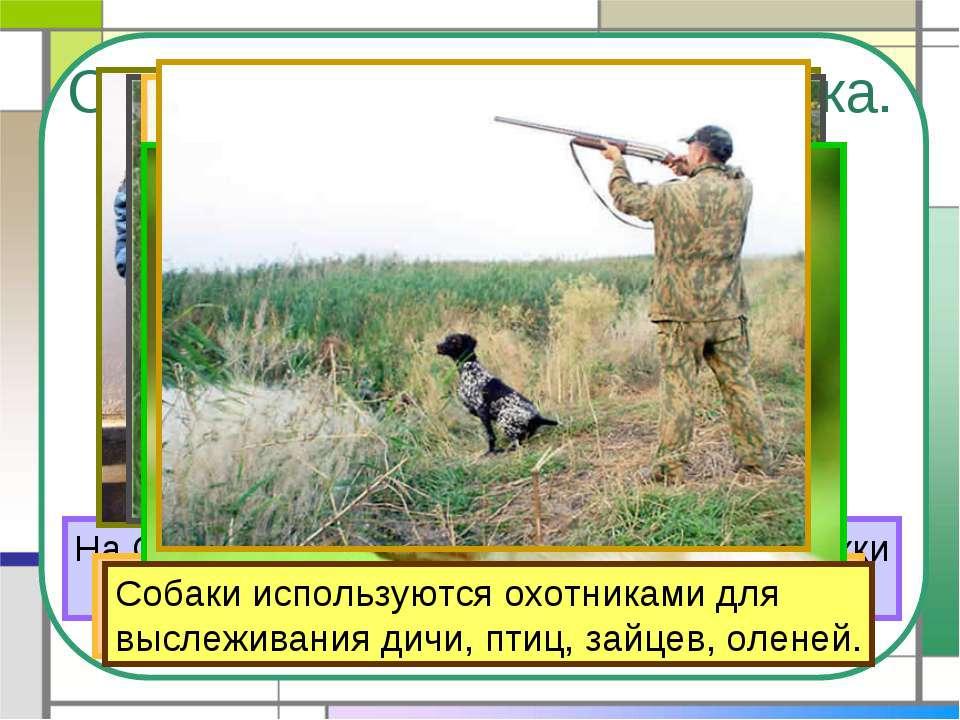 Собака – помощник человека. На Севере ездовые собаки перевозят упряжки с людь...
