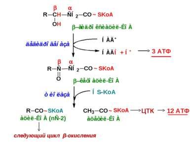 3 АТФ ЦТК 12 АТФ следующий цикл β-окисления