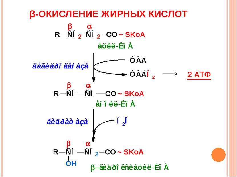 β-ОКИСЛЕНИЕ ЖИРНЫХ КИСЛОТ 2 АТФ