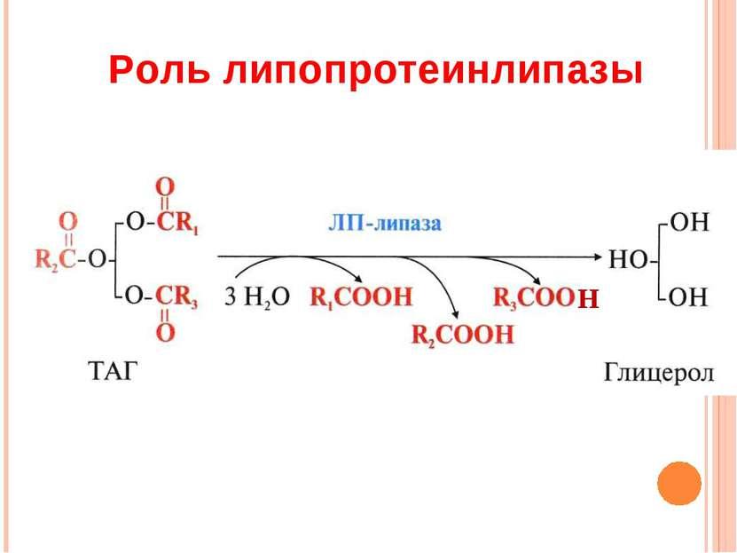 Роль липопротеинлипазы Н