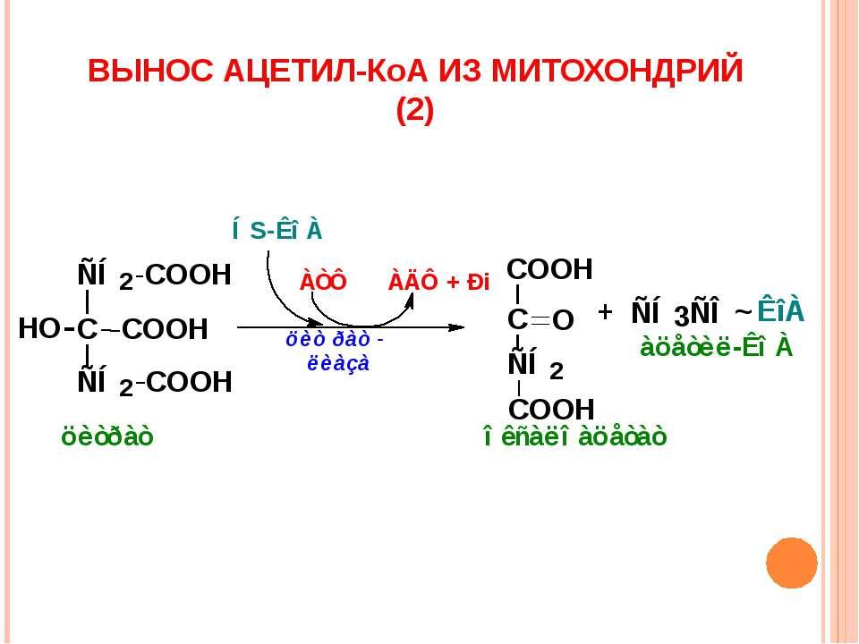 ВЫНОС АЦЕТИЛ-КоА ИЗ МИТОХОНДРИЙ (2)