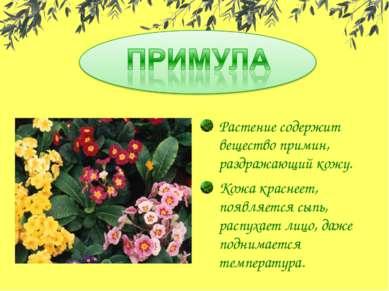Растение содержит вещество примин, раздражающий кожу. Кожа краснеет, появляет...