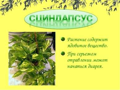 Растение содержит ядовитое вещество. При серьезном отравлении может начаться ...