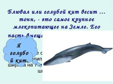 Блювал или голубой кит весит … тонн, - это самое крупное млекопитающее на Зем...