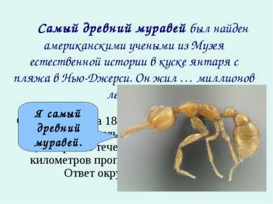 Самый древний муравей был найден американскими учеными из Музея естествен...
