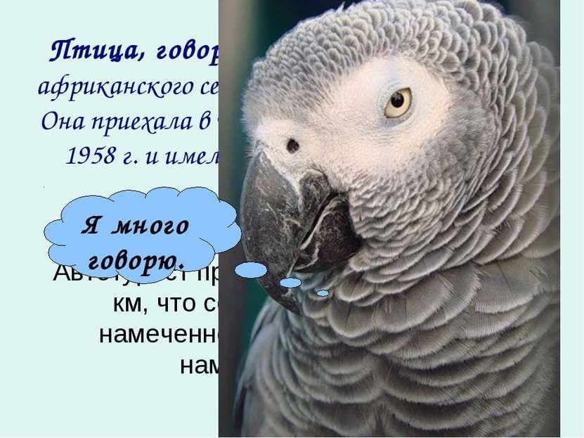Птица, говорящая лучше всех - самка африканского серого попугая по имени Прад...