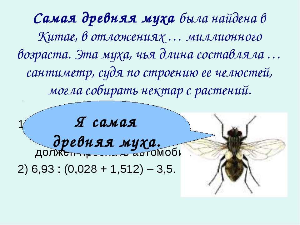 Самая древняя муха была найдена в Китае, в отложениях … миллионного возраста....