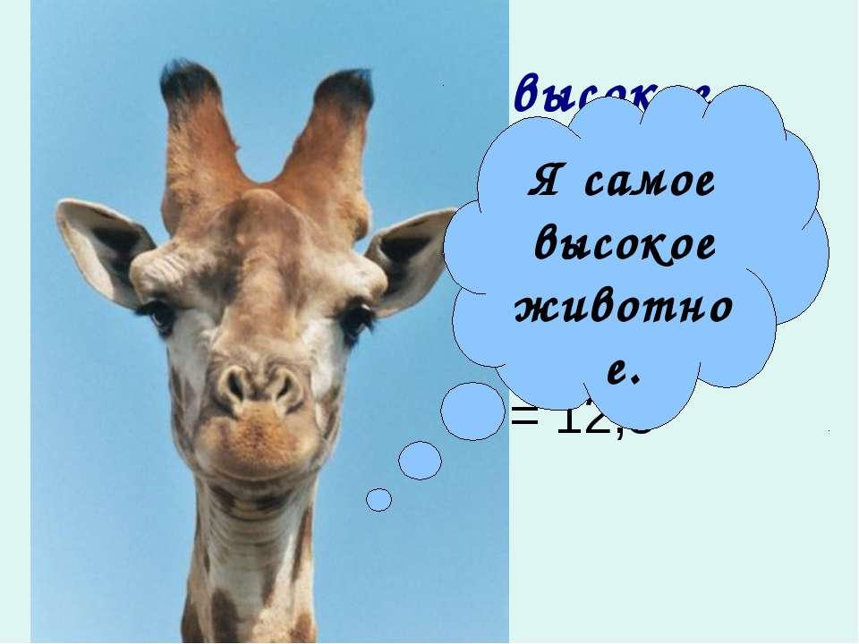 Жираф самое высокое животное в мире. Жираф носит голову и нос на высоте … мет...
