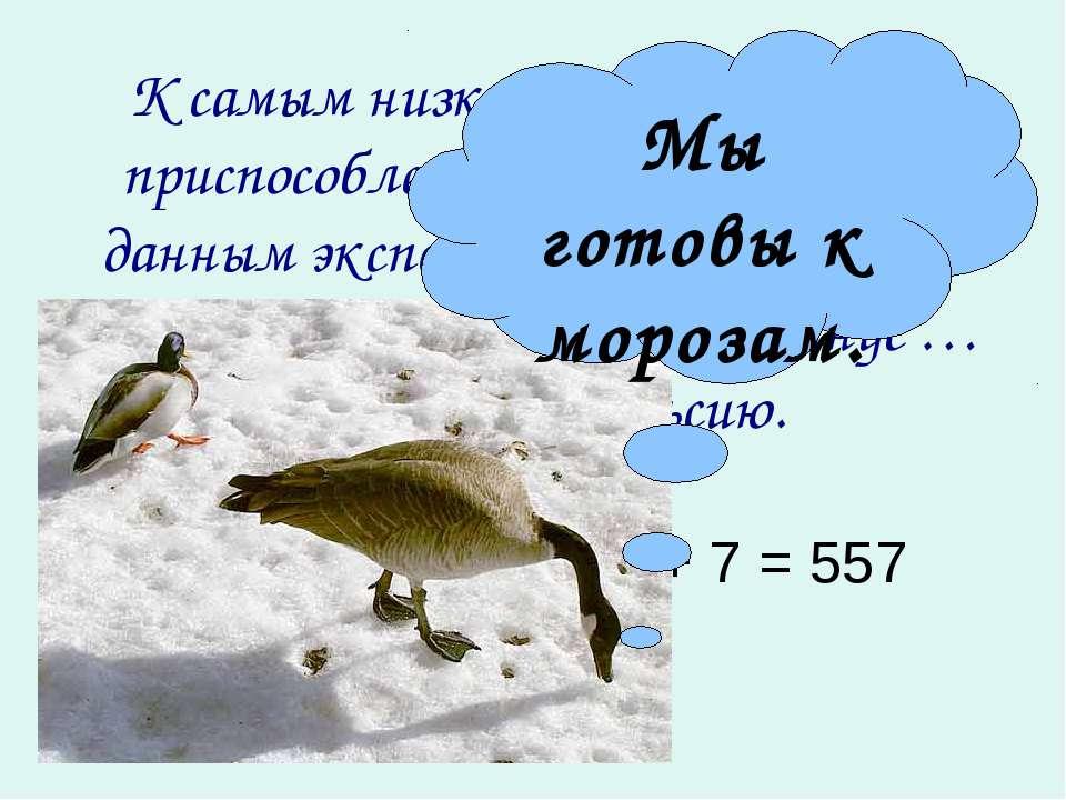 К самым низким температурам приспособлены утки и гуси. По данным эксперименто...