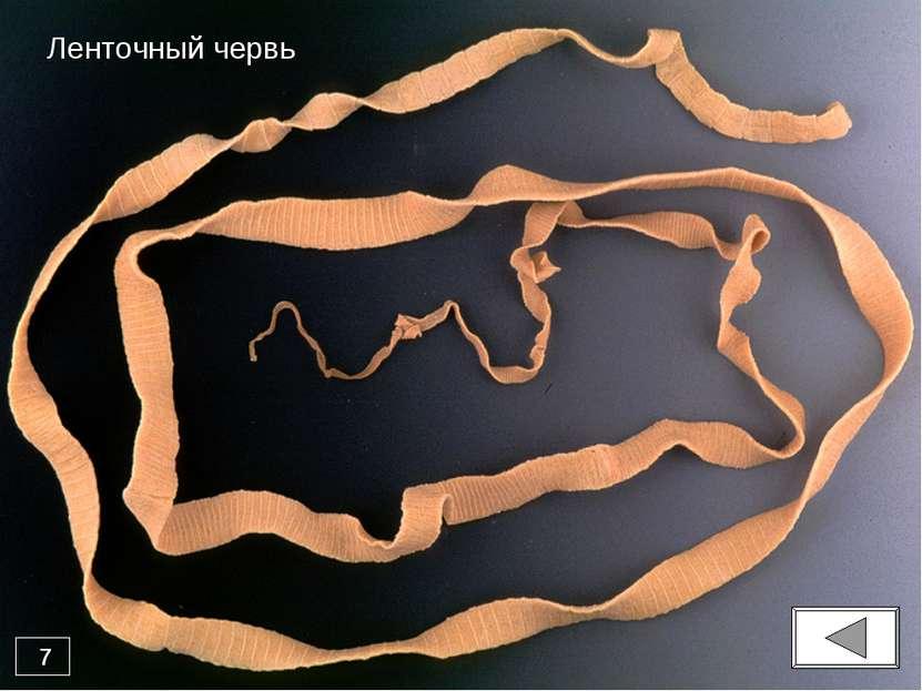 центр паразиты человека