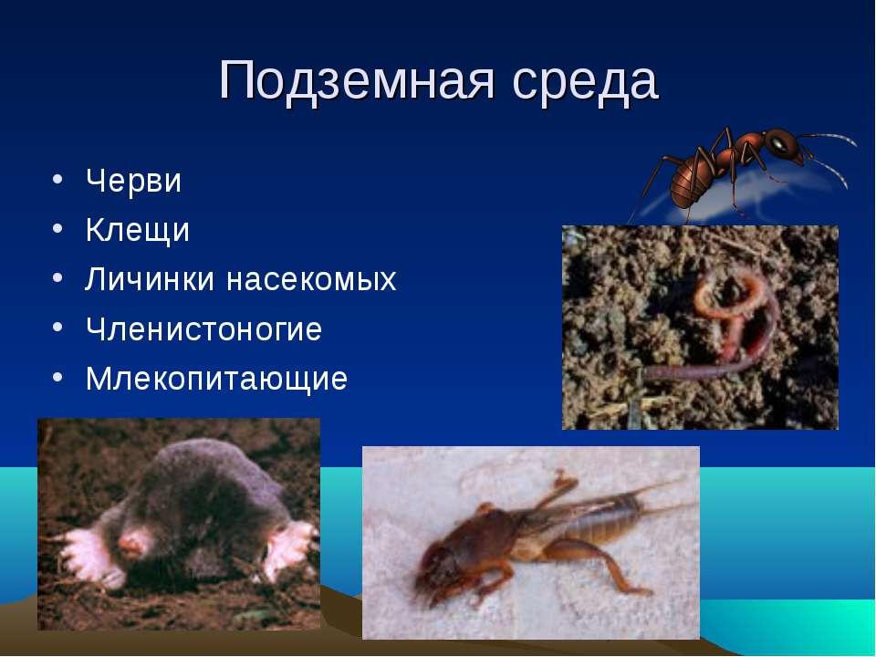 Подземная среда Черви Клещи Личинки насекомых Членистоногие Млекопитающие
