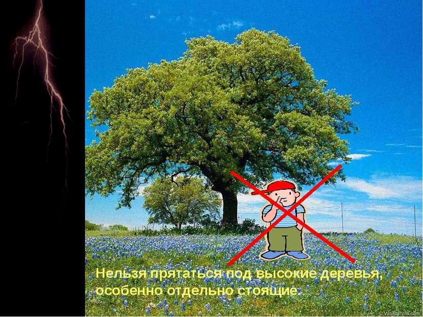 Нельзя прятаться под высокие деревья, особенно отдельно стоящие.
