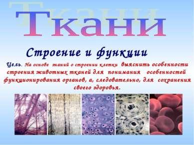 Строение и функции Цель. На основе знаний о строении клетки выяснить особенно...