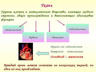 Ткань Группы клеток и межклеточное вещество, имеющие сходное строение, общее ...