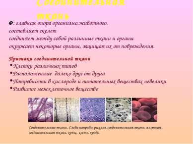 Соединительная ткань Ф: главная опора организма животного. составляет скелет ...