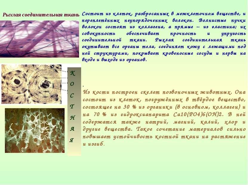 Состоит из клеток, разбросанных в межклеточном веществе, и переплетённых неуп...