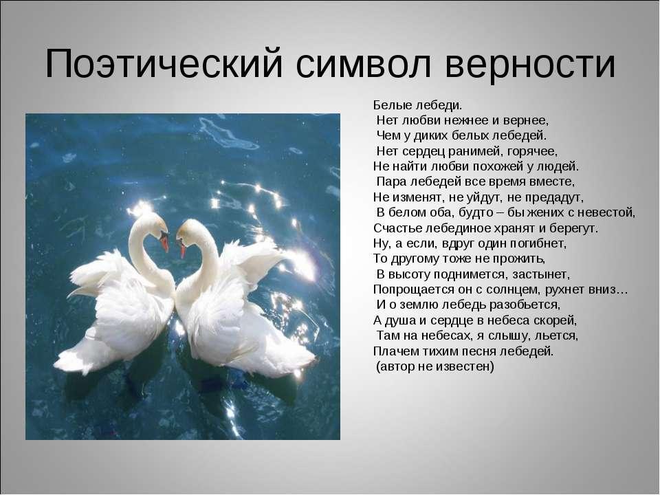 Поэтический символ верности Белые лебеди. Нет любви нежнее и вернее, Чем у ди...