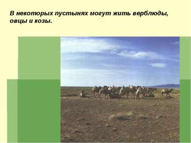 В некоторых пустынях могут жить верблюды, овцы и козы.