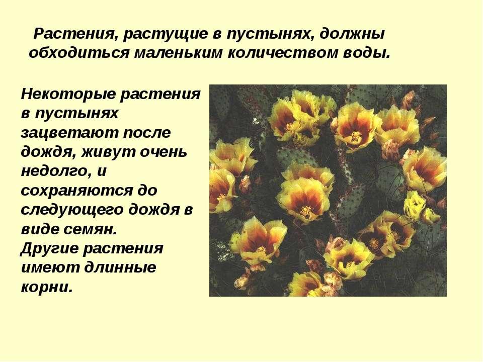 Растения, растущие в пустынях, должны обходиться маленьким количеством воды. ...