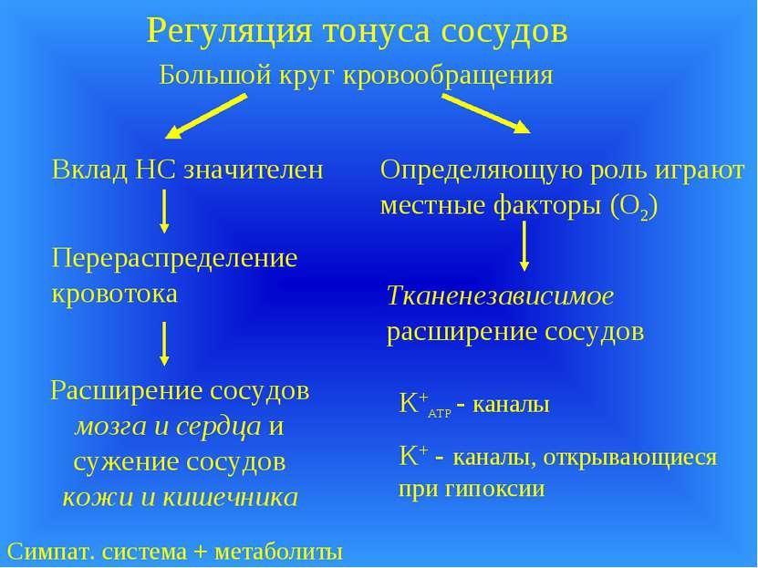 Регуляция тонуса сосудов Большой круг кровообращения Вклад НС значителен Опре...