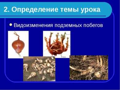 2. Определение темы урока Видоизменения подземных побегов
