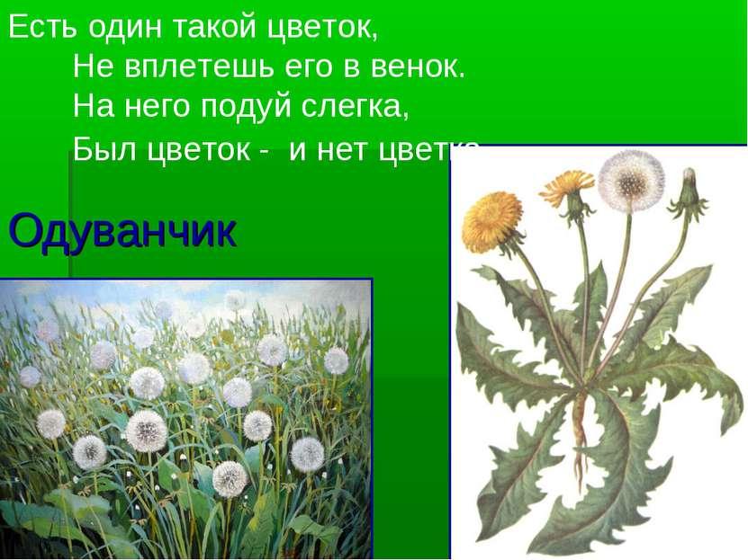 Одуванчик Есть один такой цветок, Не вплетешь его в венок. На него подуй слег...