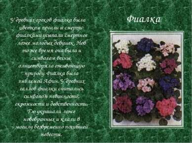 Фиалка У древних греков фиалка была цветком печали и смерти: фиалками усыпали...