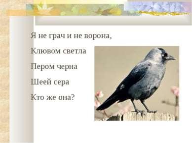 Я не грач и не ворона, Клювом светла Пером черна Шеей сера Кто же она?