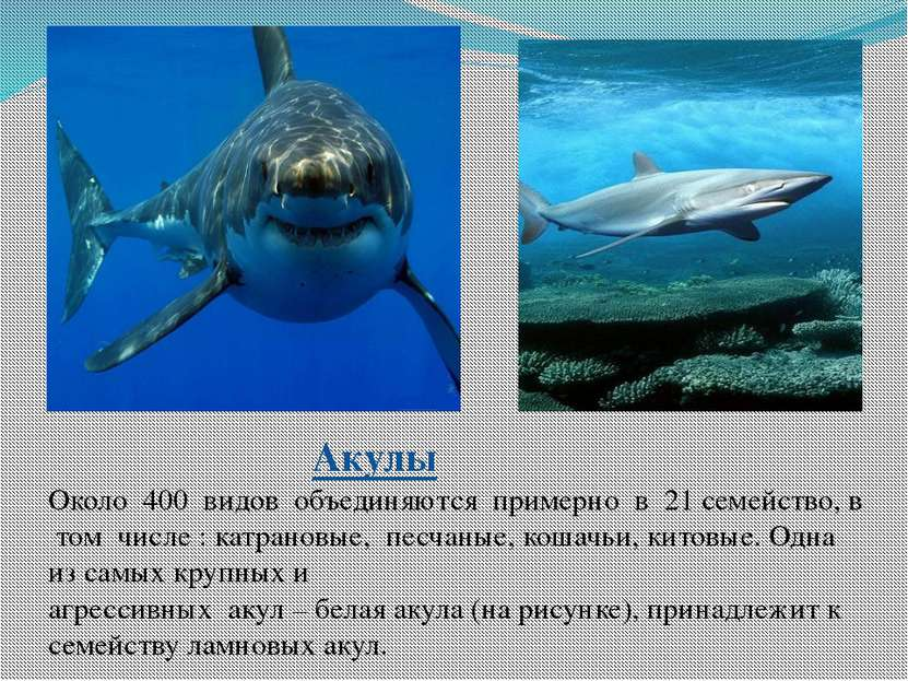 Акулы Около 400 видов объединяются примерно в 21 семейство, в том числе : кат...
