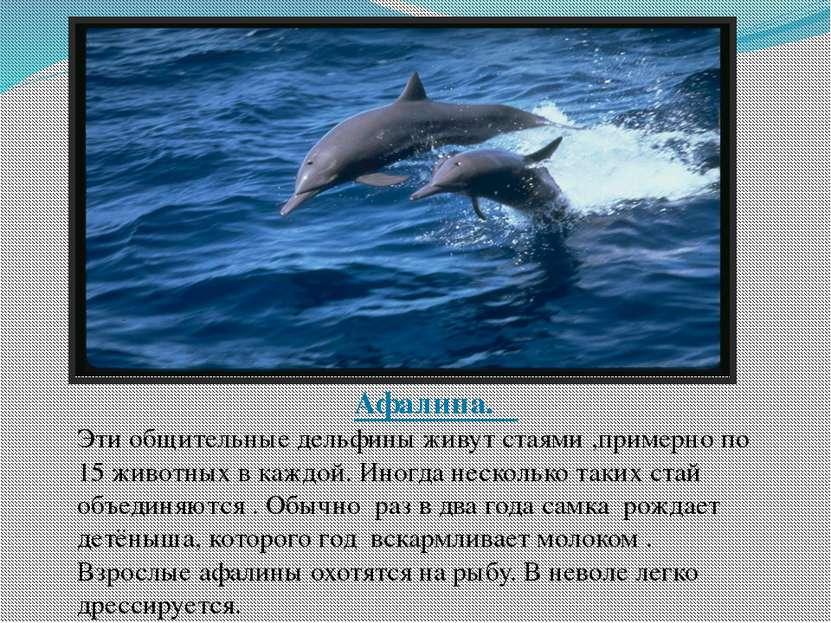 Афалина. Эти общительные дельфины живут стаями ,примерно по 15 животных в каж...