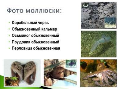 Корабельный червь Обыкновенный кальмар Осьминог обыкновенный Прудовик обыкнов...