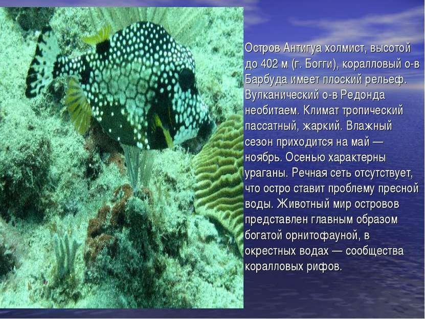 Остров Антигуа холмист, высотой до 402м (г. Богги), коралловый о-в Барбуда и...