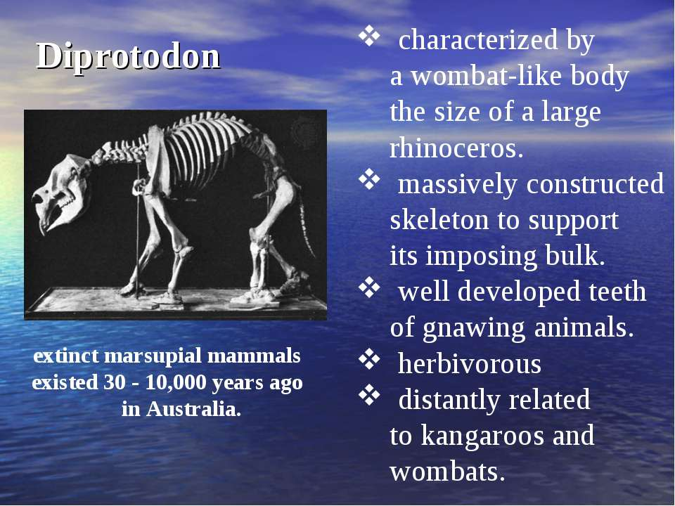 Diprotodon characterized by a wombat-like body the size of a large rhinoceros...