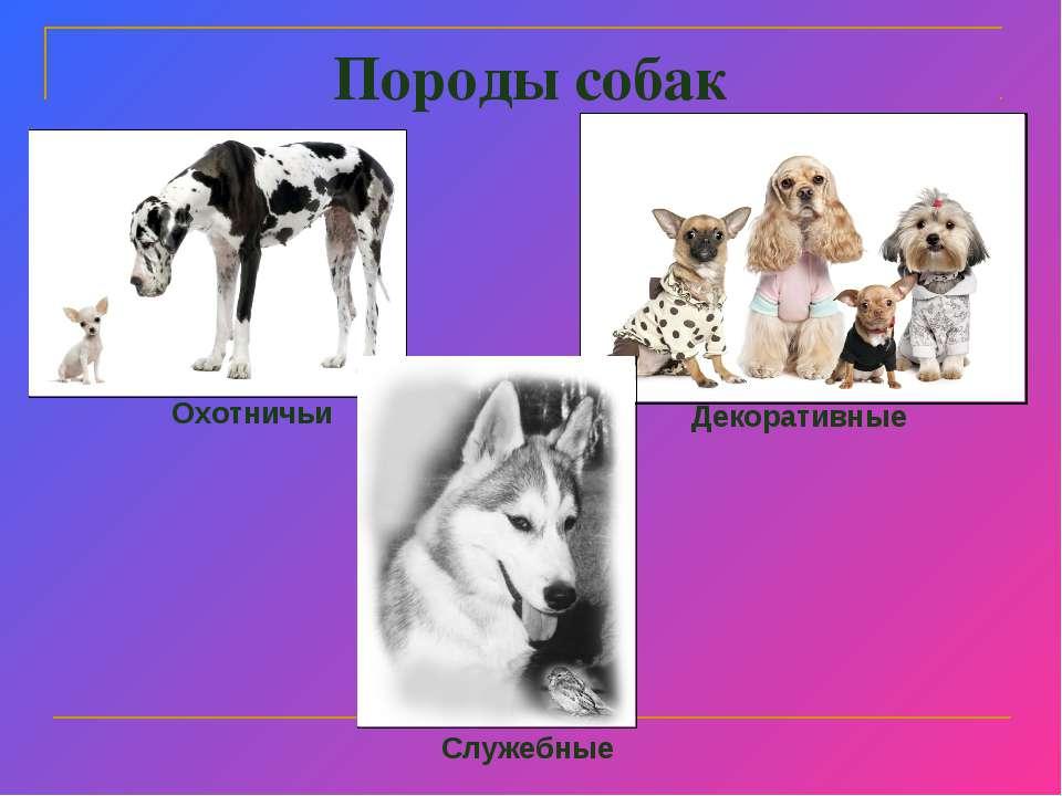 Породы собак презентация