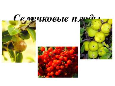 Семечковые плоды