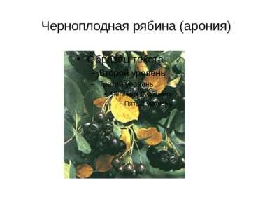 Черноплодная рябина (арония)
